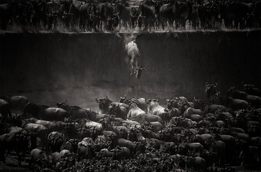 animal-migration-photography-1111__880