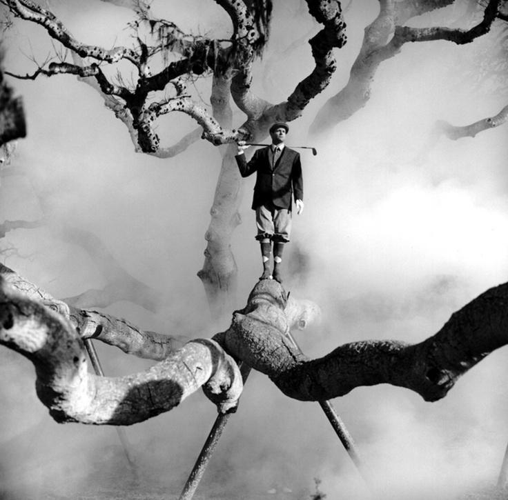 مرد و درخت و مه