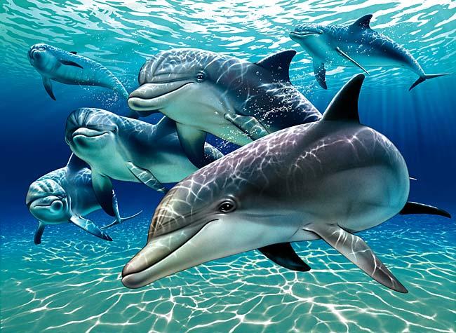 دلفینها رفقایشان را به اسم می شناسن