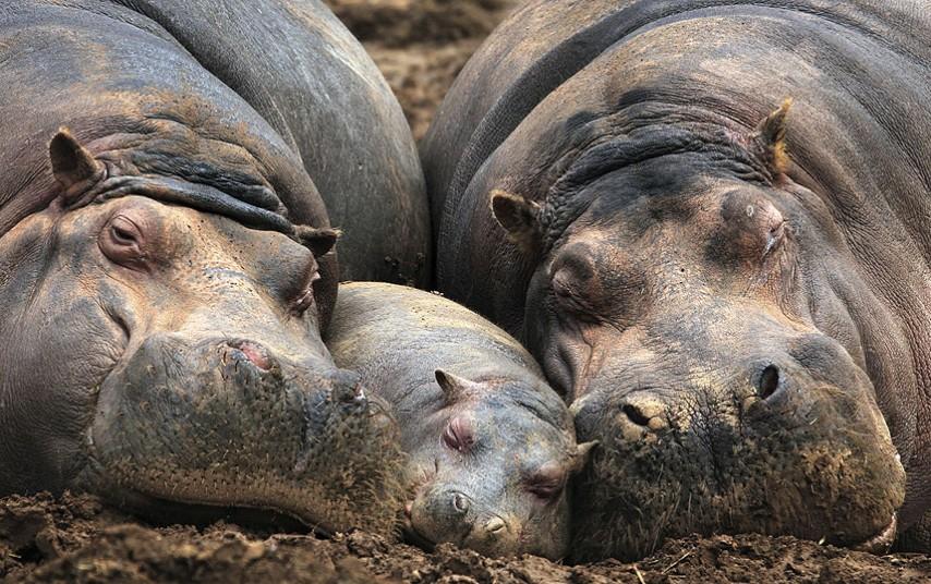 حیوانات و بچه هایشان در باغ وحشی در اسپانیا