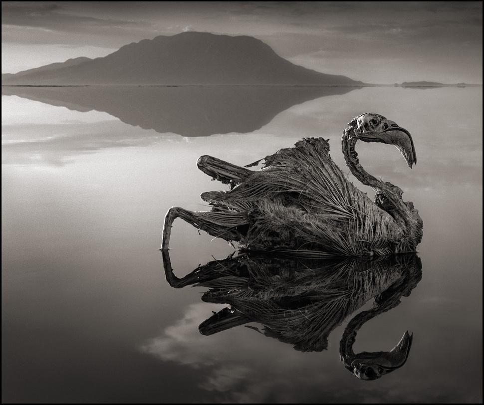 دریاچه ای که هر حیوانی را سنگ می کند