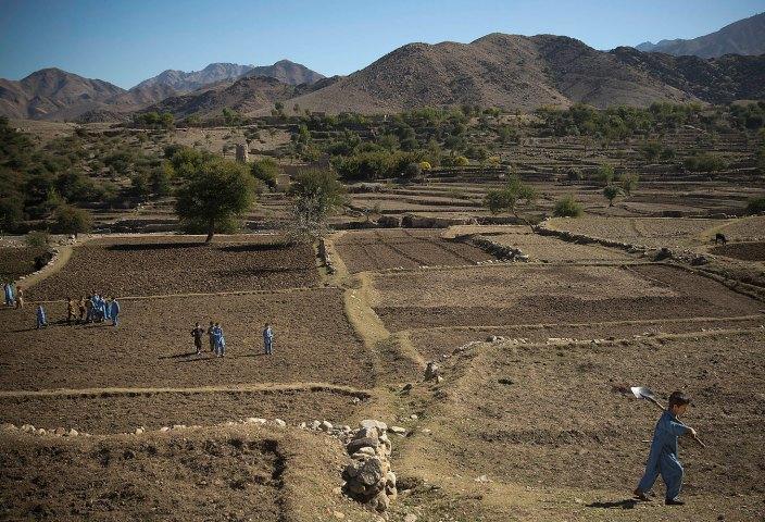 مزارع خشخاش افغانستان
