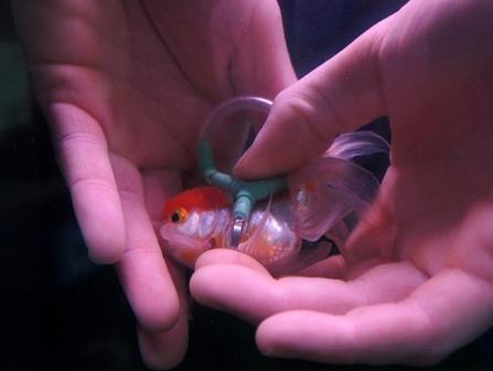 مردی برای ماهی اش جلیقه نجات ساخت تا غرق نشود!