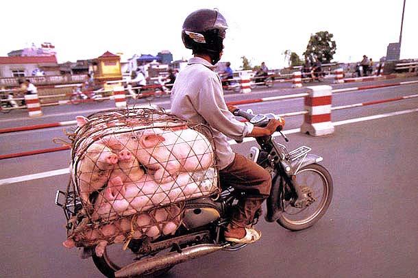 Overloaded-Vietnamese-Motorbikes-That-Defy-Logic-by-Photographer-Hans-Kemp-3