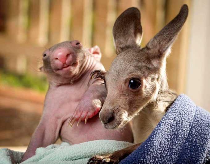 kangaroo-17-9-921