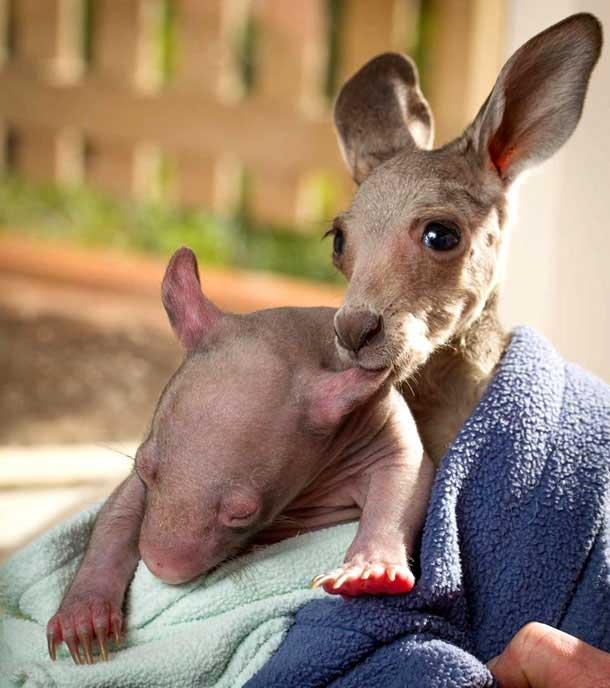kangaroo-17-9-922