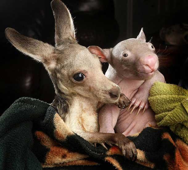 kangaroo-17-9-924