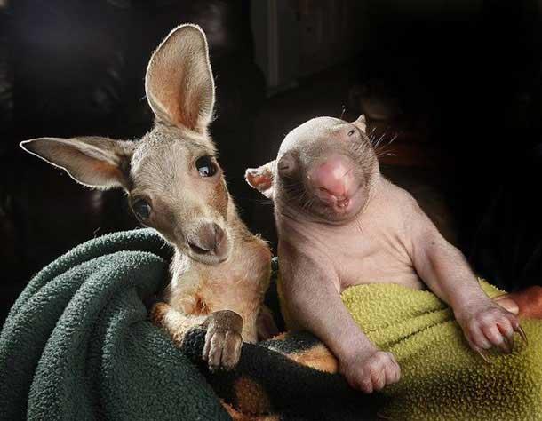 kangaroo-17-9-926