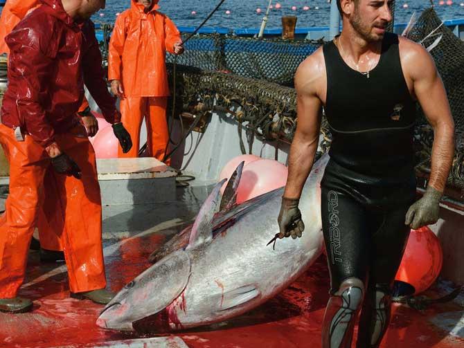 02-spanish-bluefin-catch-67
