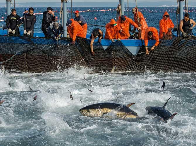 07-spanish-fisherman-nettin