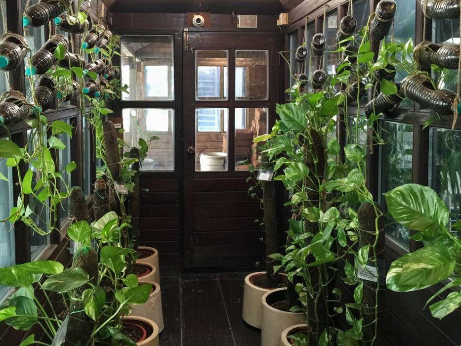 آیا استفاده از گیاهان آپارتمانی نقشی در پاکسازی هوای آلودهترین شهر دنیا دارد؟