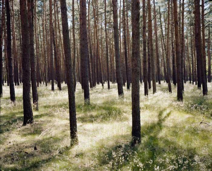 مجموعهای از عکسهای ویم وندرس (Wim Wenders) فیلمساز آلمانی