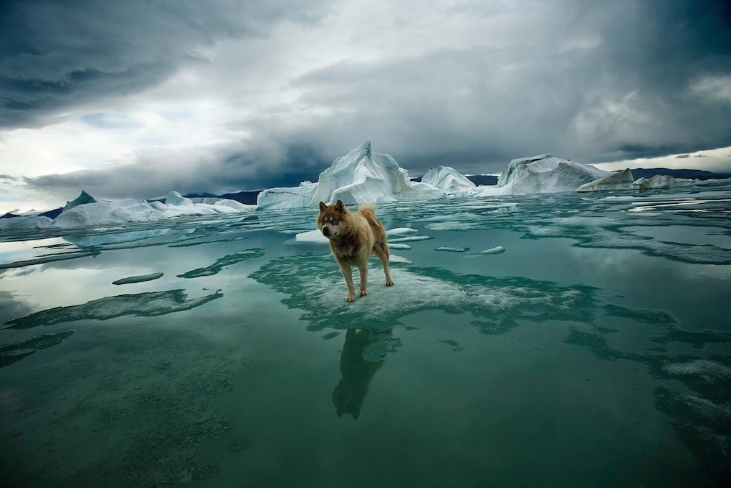 تصاویری از زیبایی و خطر در قطب شمال